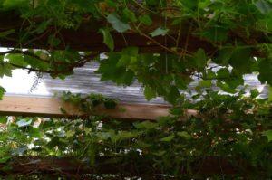 Blick von unten durch das beschattete Pergoladach: Das Naturgeflecht der Weidenmatten läßt genügend Licht durch. Mensch und Pflanze sitzen nicht im Dunkeln!